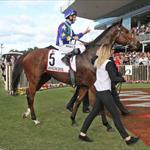 Magicool returns to scale after Qld Derby win